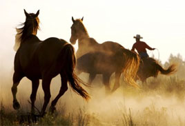 Wild horse stampede, learn about Wild Horse Strategies and CEO, Dan DeVries