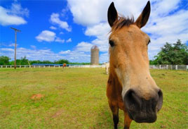 An inquisitive horse noses the camera, the header image for Wild Horse Strategies posts covering strategic marketing, product development and launch.